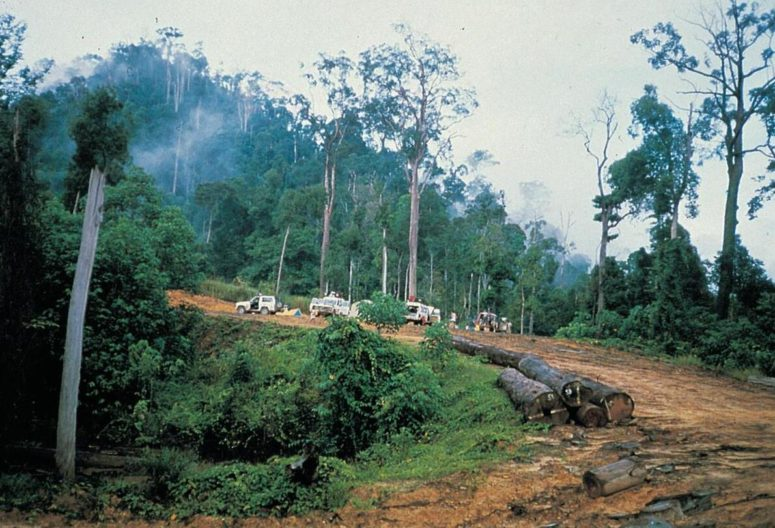 Indonesia's large rainforest
