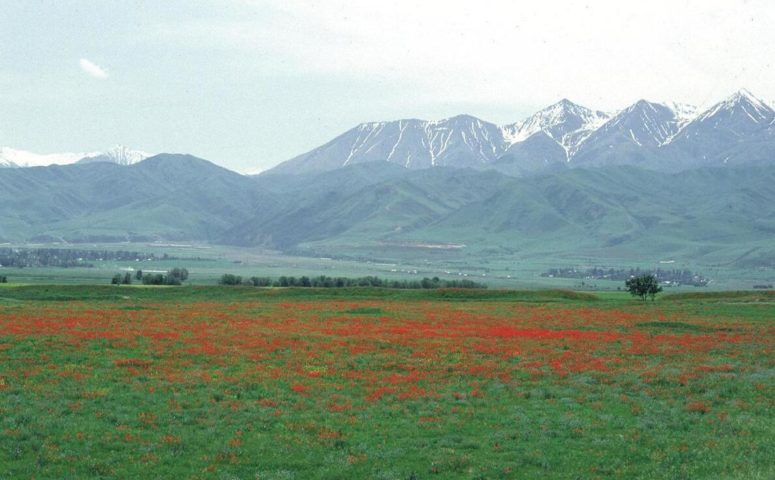 Plainsland with Tian Shan in the background