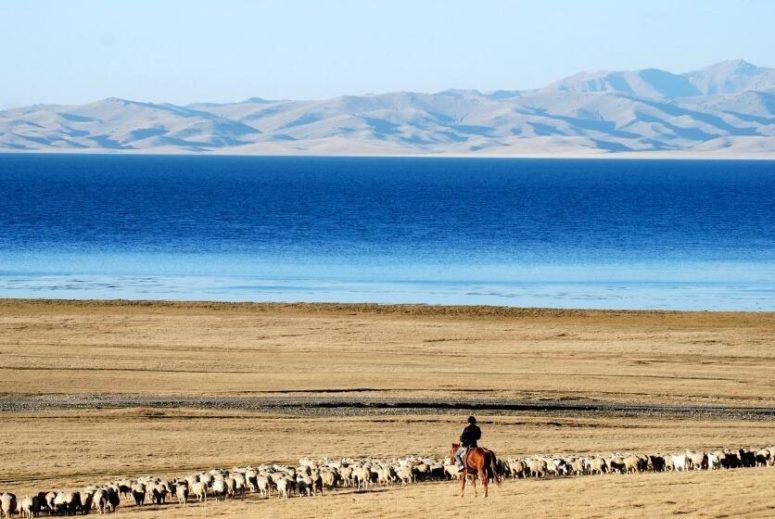 Animal husbandry in Kyrgyzstan