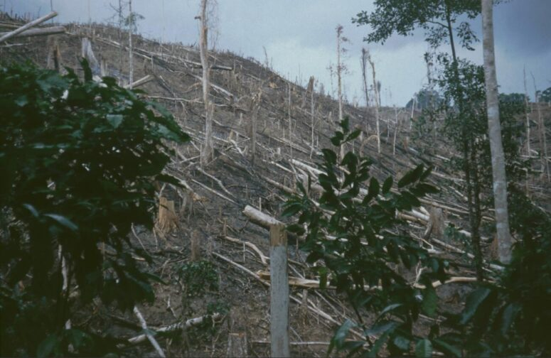 Burned forest areas in West Papua