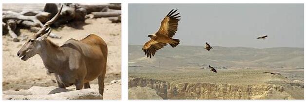 Jordan Wildlife