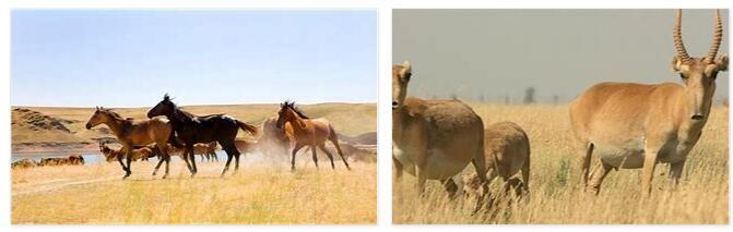 Kazakhstan Animals