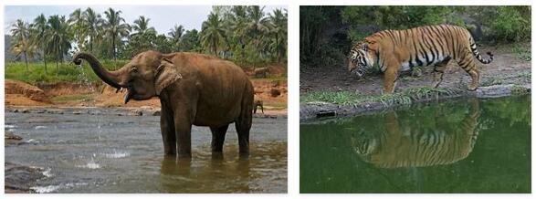 Laos Animals