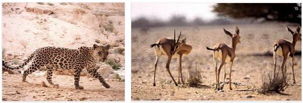 Oman Animals
