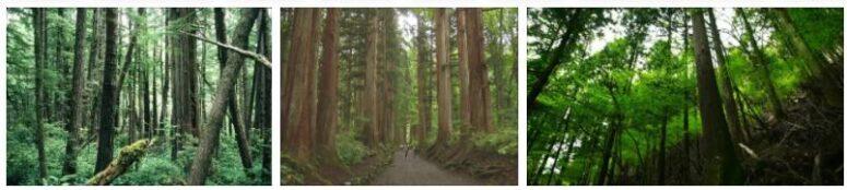 Ikushima Cedar Forest
